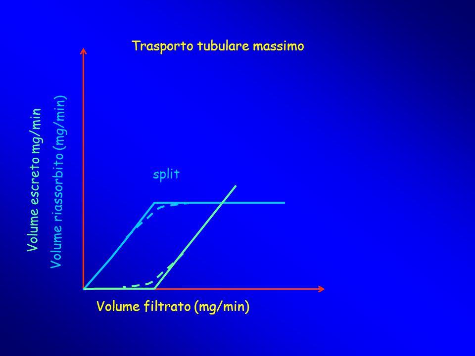 Volume filtrato (mg/min) Volume riassorbito (mg/min) Volume escreto mg/min Trasporto tubulare massimo split