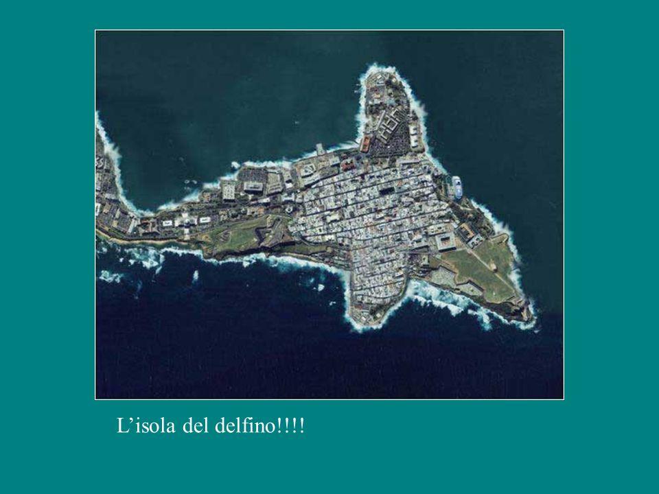 L'isola del delfino!!!!