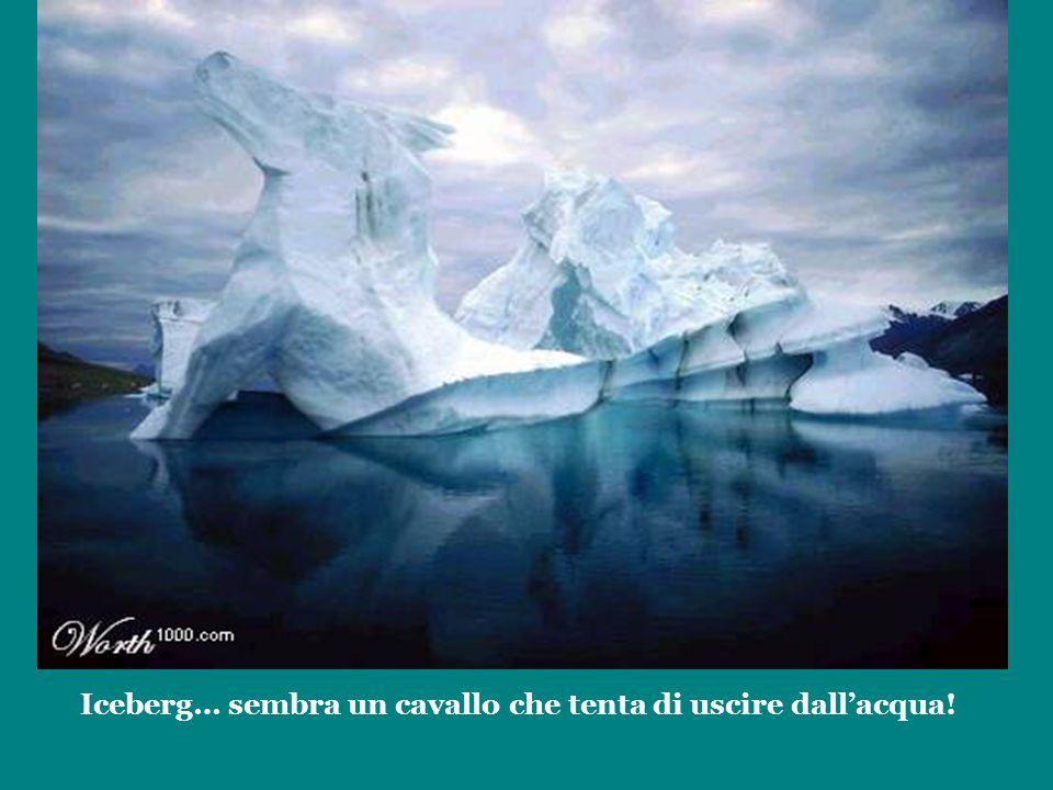 Iceberg… sembra un cavallo che tenta di uscire dall'acqua!