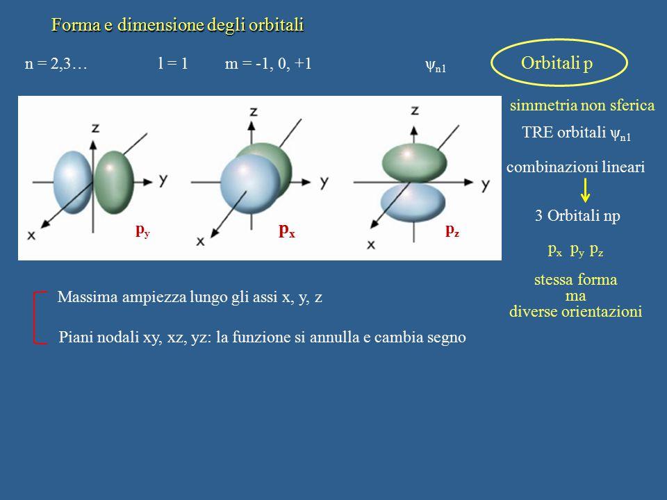 Forma e dimensione degli orbitali n = 2,3…l = 1m = -1, 0, +1 ψ n1 Orbitali p simmetria non sferica TRE orbitali ψ n1 combinazioni lineari 3 Orbitali n