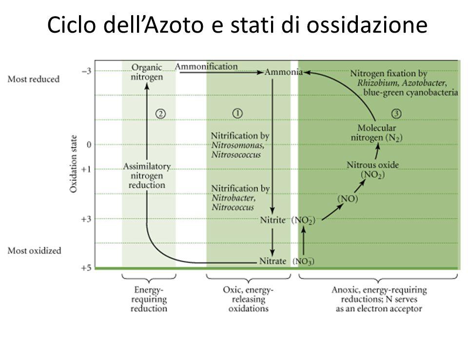 Ciclo dell'Azoto e stati di ossidazione