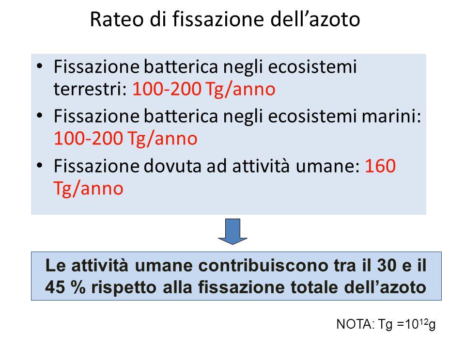 Rateo di fissazione dell'azoto Fissazione batterica negli ecosistemi terrestri: 100-200 Tg/anno Fissazione batterica negli ecosistemi marini: 100-200