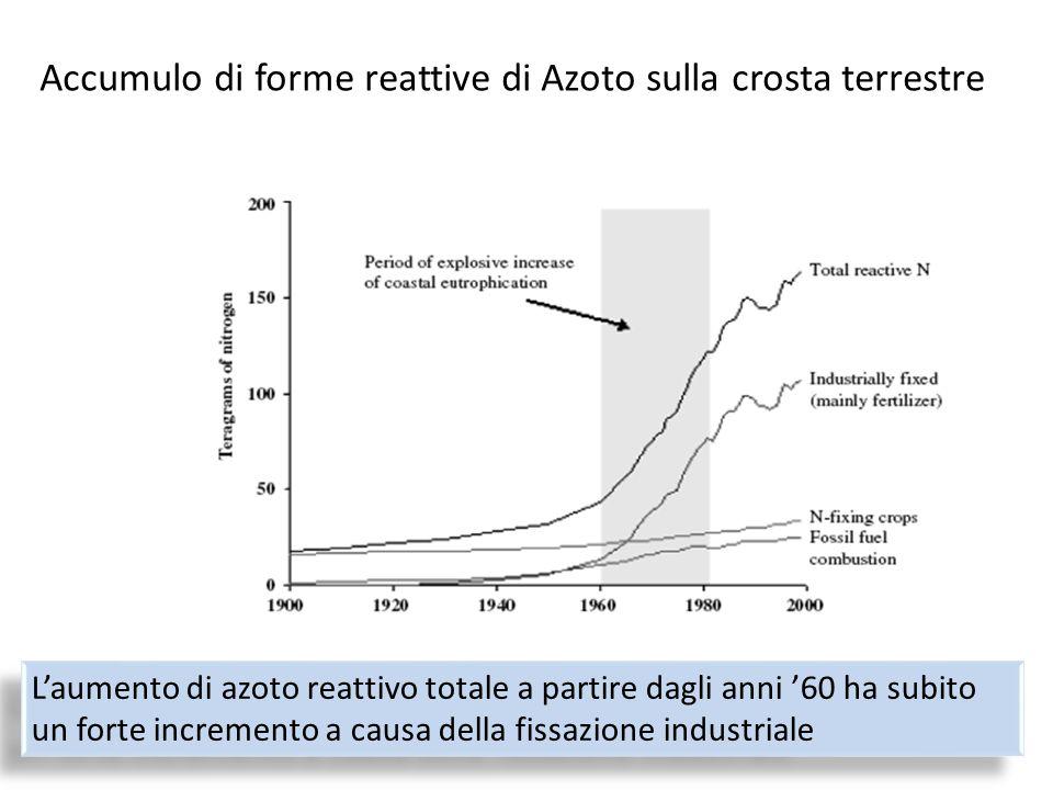 L'aumento di azoto reattivo totale a partire dagli anni '60 ha subito un forte incremento a causa della fissazione industriale Accumulo di forme reatt