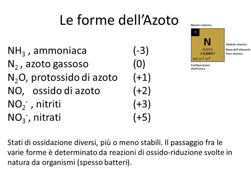 Le forme dell'Azoto NH 3, ammoniaca (-3) N 2, azoto gassoso (0) N 2 O, protossido di azoto(+1) NO, ossido di azoto(+2) NO 2 -, nitriti (+3) NO 3 -, ni