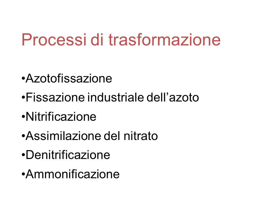 Processi di trasformazione Azotofissazione Fissazione industriale dell'azoto Nitrificazione Assimilazione del nitrato Denitrificazione Ammonificazione