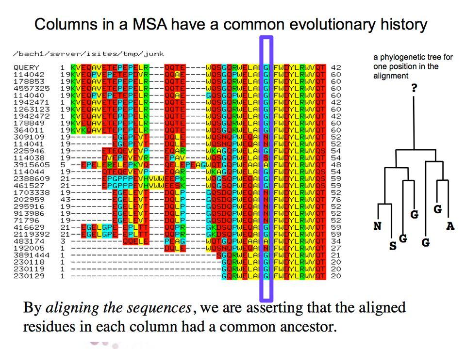 L'analisi degli allineamenti mostrò come diverse sostituzioni aminoacidiche si presentassero con frequenze anche molto differenti (diversa mutabilità