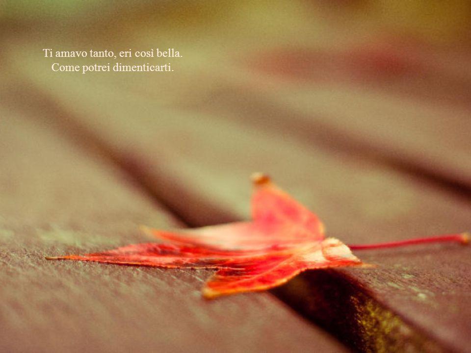 Le foglie morte cadono a mucchi e con loro i ricordi, i rimpianti. Ma il mio fedele e silenzioso amore sorride ancora, dice grazie alla vita.