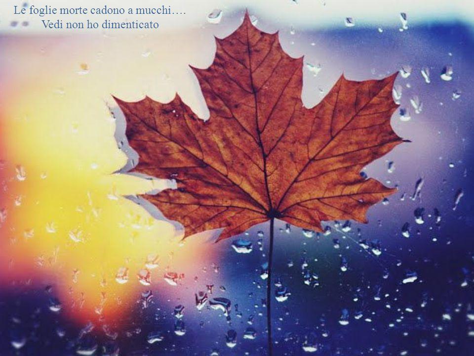 Le foglie morte cadono a mucchi…. Vedi non ho dimenticato