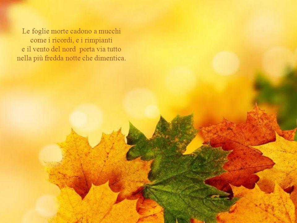 Le foglie morte cadono a mucchi come i ricordi, e i rimpianti e il vento del nord porta via tutto nella più fredda notte che dimentica.