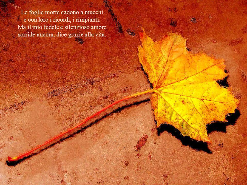 Le foglie morte cadono a mucchi e con loro i ricordi, i rimpianti.