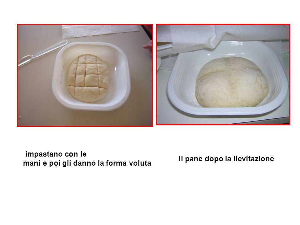 impastano con le mani e poi gli danno la forma voluta Il pane dopo la lievitazione