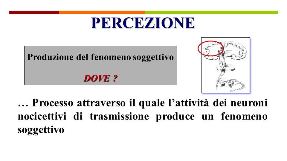 … Processo attraverso il quale l'attività dei neuroni nocicettivi di trasmissione produce un fenomeno soggettivo Produzione del fenomeno soggettivo DO