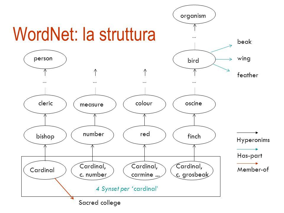 WordNet [Miller]  Grossa risorsa lessicale organizzata a rete semantica (122.000 termini)  i nomi, i verbi, gli aggettivi, gli avverbi sono organizzati in insiemi di sinonimi (synset) che rappresentano un concetto (117.000 synset);  alla parola è tipicamente associato un insieme di synset: i sensi della parola  http://wordnet.princeton.edu/