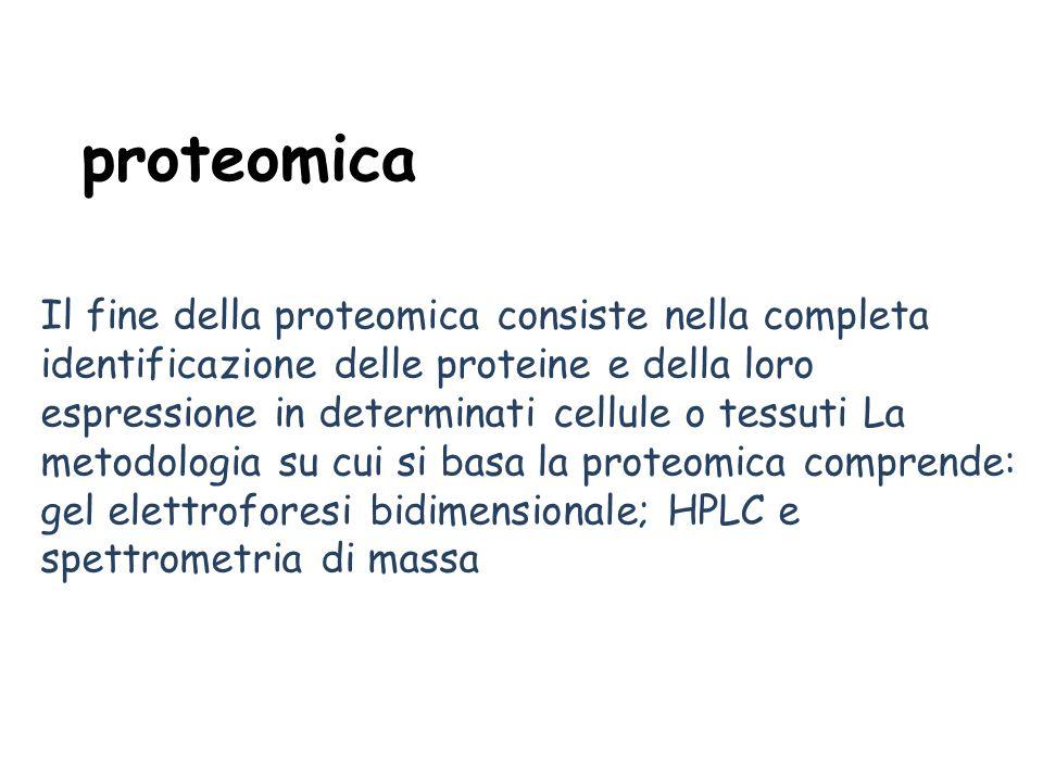proteomica Il fine della proteomica consiste nella completa identificazione delle proteine e della loro espressione in determinati cellule o tessuti La metodologia su cui si basa la proteomica comprende: gel elettroforesi bidimensionale; HPLC e spettrometria di massa