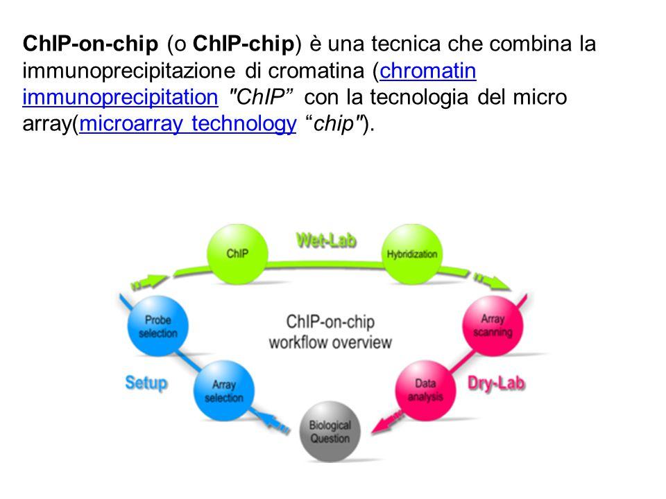 Chip-on-chip analysis per lo studio delle interazioni DNA proteine