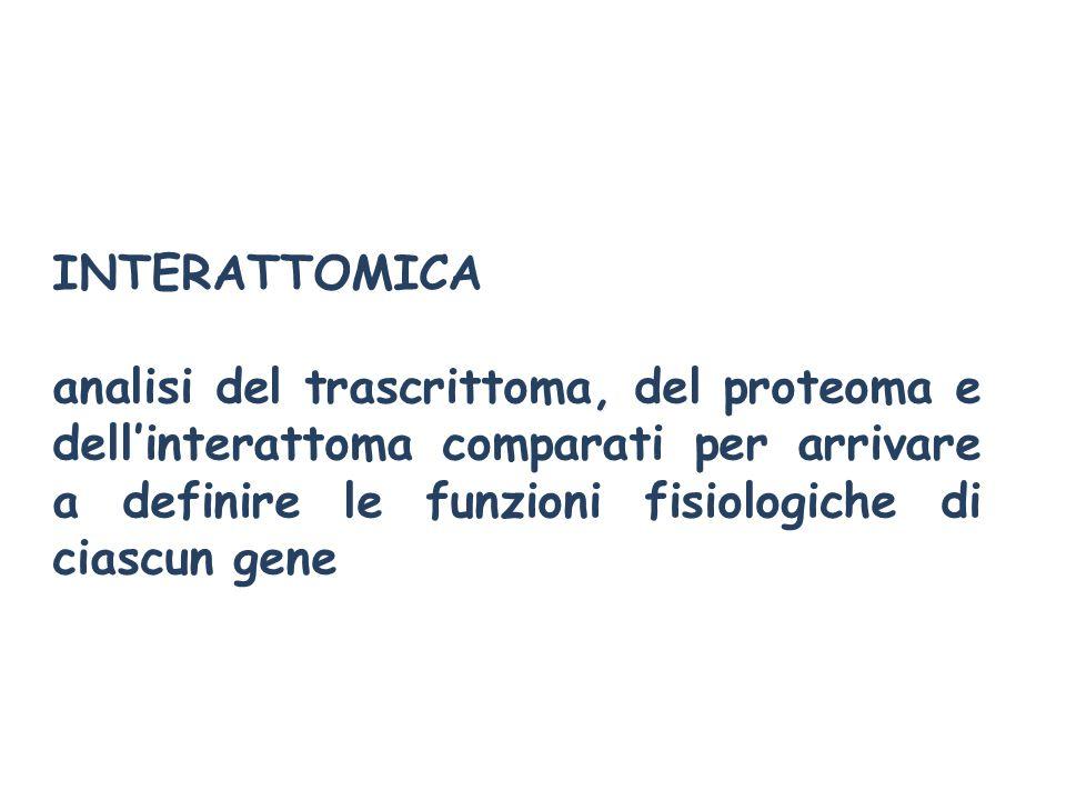 INTERATTOMICA analisi del trascrittoma, del proteoma e dell'interattoma comparati per arrivare a definire le funzioni fisiologiche di ciascun gene