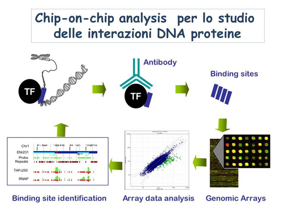 Farmacogenetica nella ricerca e sviluppo di nuovi farmaci Farmacogenetica: lo studio di variazioni genetiche e del loro effetto nella risposta a farmaci