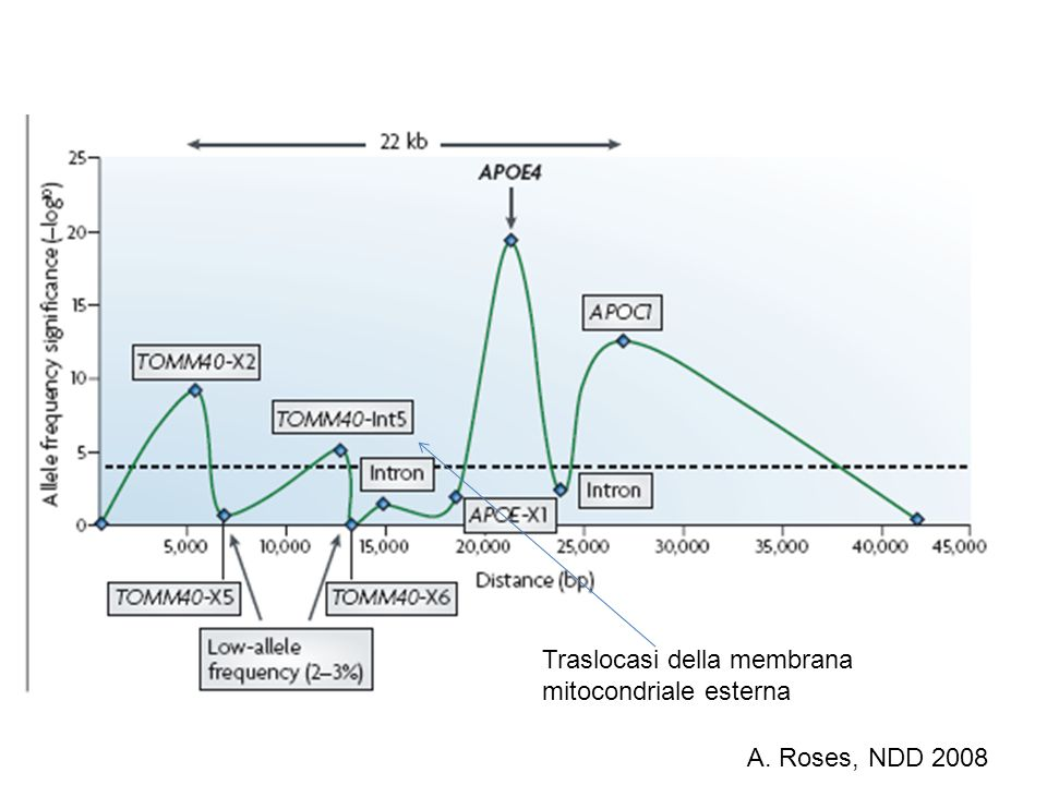 A. Roses, NDD 2008 Traslocasi della membrana mitocondriale esterna