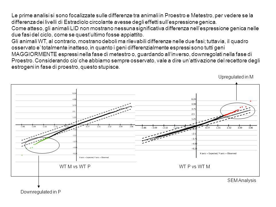 Le prime analisi si sono focalizzate sulle differenze tra animali in Proestro e Metestro, per vedere se la differenza dei livelli di Estradiolo circolante avesse degli effetti sull'espressione genica.