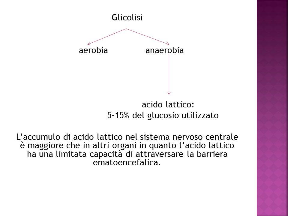 Glicolisi aerobia anaerobia acido lattico: 5-15% del glucosio utilizzato L'accumulo di acido lattico nel sistema nervoso centrale è maggiore che in altri organi in quanto l'acido lattico ha una limitata capacità di attraversare la barriera ematoencefalica.