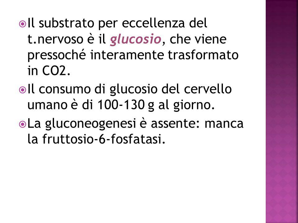  Il substrato per eccellenza del t.nervoso è il glucosio, che viene pressoché interamente trasformato in CO2.