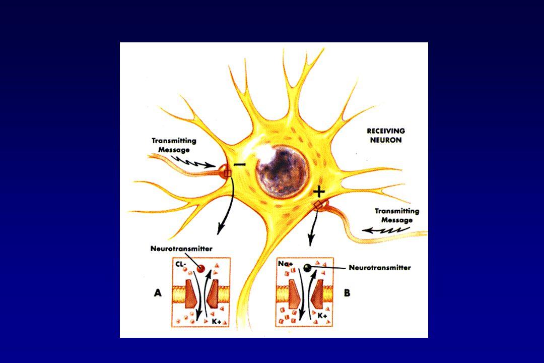 Antiepilettici e canali del sodioAntiepilettici e canali del calcio