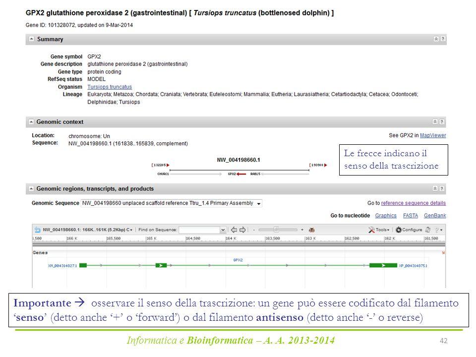 Informatica e Bioinformatica – A. A. 2013-2014 42 Importante  osservare il senso della trascrizione: un gene può essere codificato dal filamento 'sen