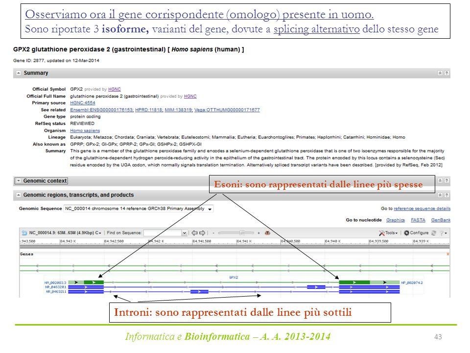 Informatica e Bioinformatica – A. A. 2013-2014 43 Esoni: sono rappresentati dalle linee più spesse Introni: sono rappresentati dalle linee più sottili