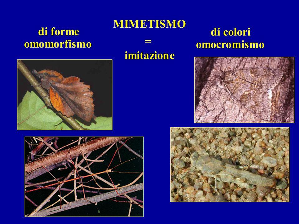 MIMETISMO = imitazione di forme di colori omocromismo omomorfismo