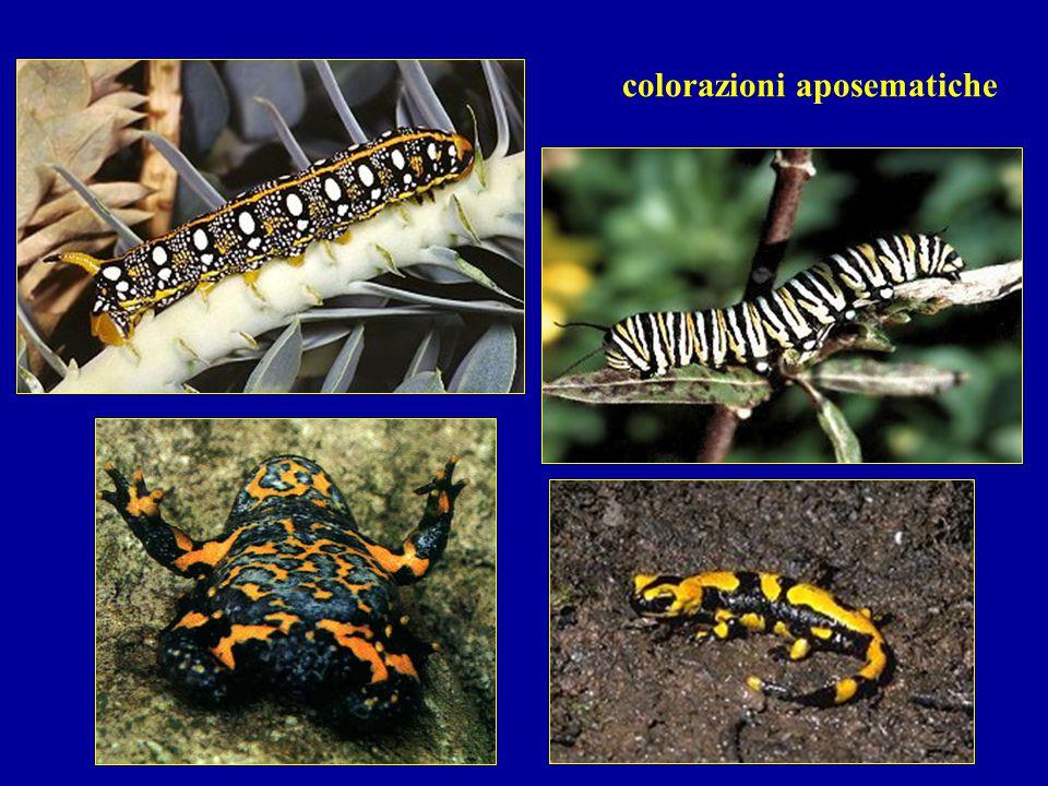 colorazioni aposematiche