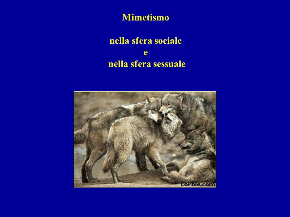 Mimetismo nella sfera sociale e nella sfera sessuale