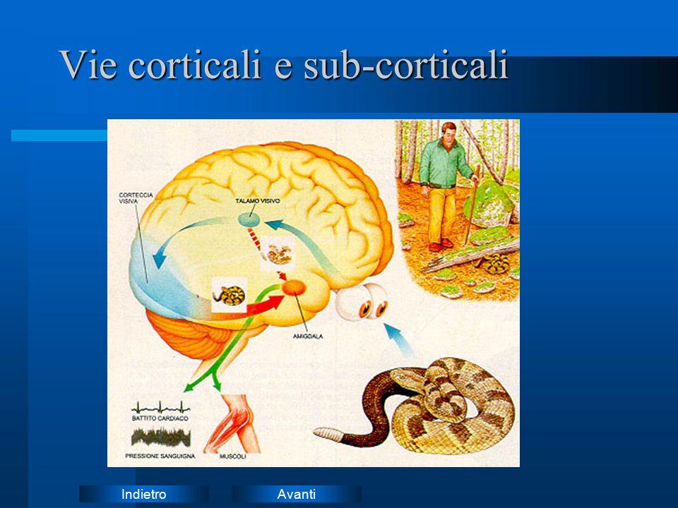 AvantiIndietro Vie corticali e sub-corticali