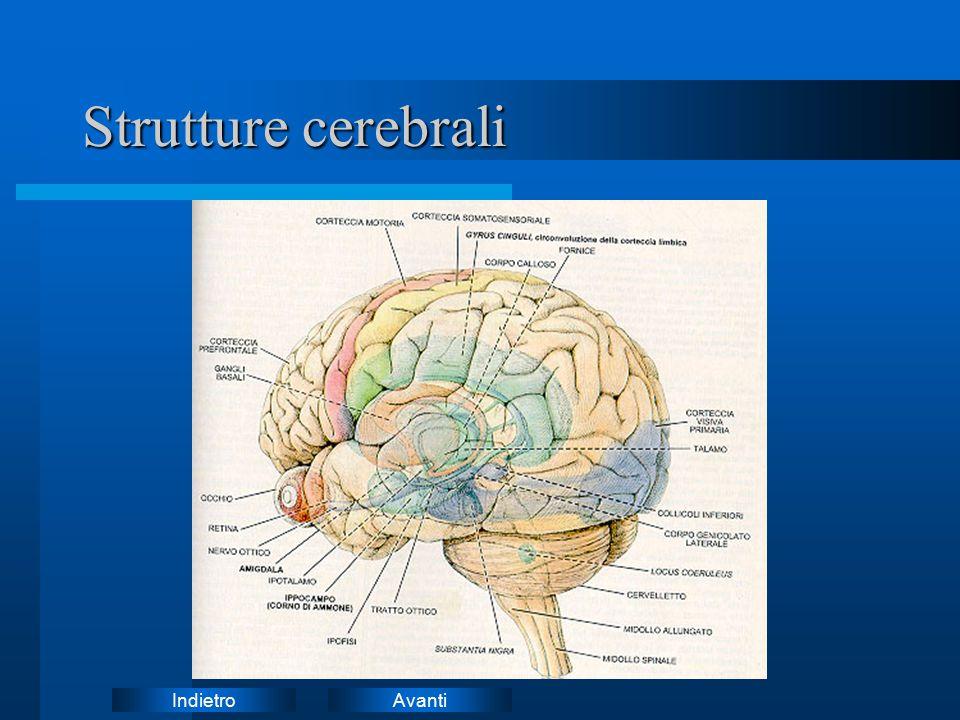 AvantiIndietro Strutture cerebrali