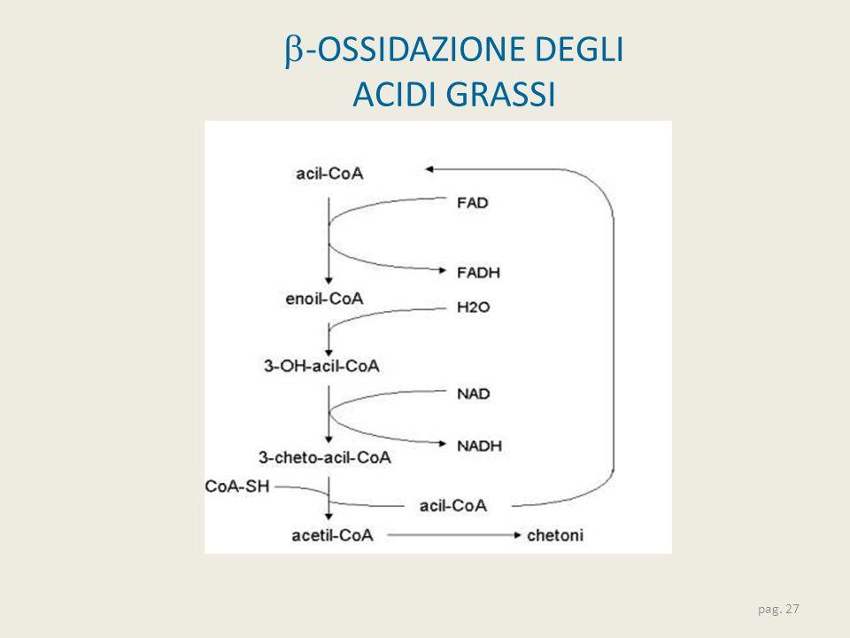  -OSSIDAZIONE DEGLI ACIDI GRASSI pag. 27