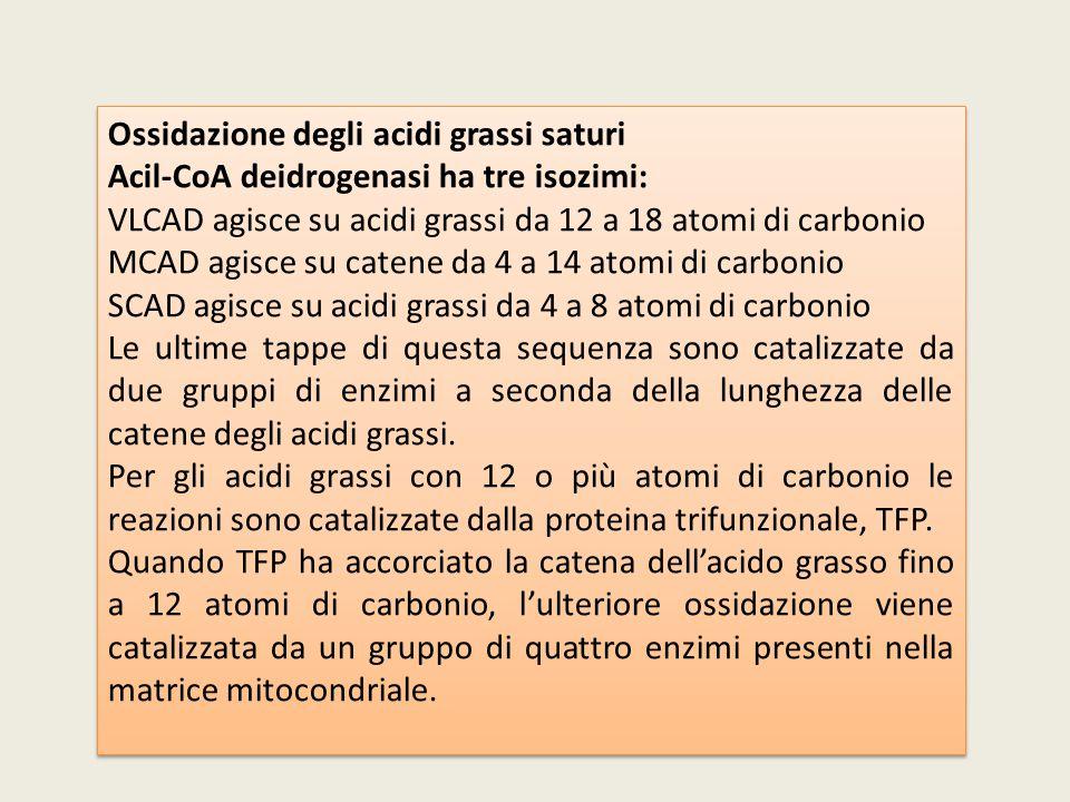 Ossidazione degli acidi grassi saturi Acil-CoA deidrogenasi ha tre isozimi: VLCAD agisce su acidi grassi da 12 a 18 atomi di carbonio MCAD agisce su c