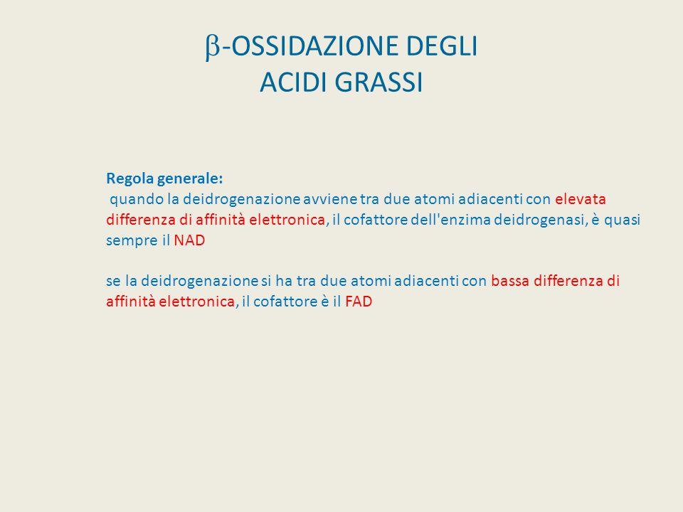  -OSSIDAZIONE DEGLI ACIDI GRASSI Regola generale: quando la deidrogenazione avviene tra due atomi adiacenti con elevata differenza di affinità elettr