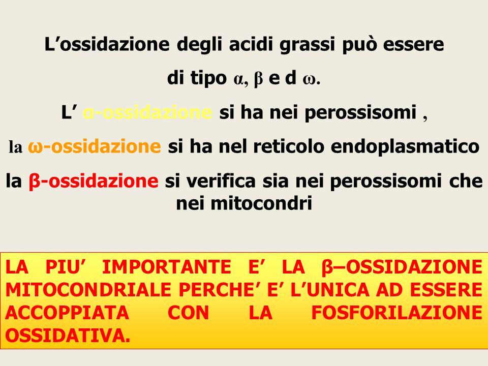 L'ossidazione degli acidi grassi può essere di tipo α, β e  d ω. L' α-ossidazione si ha nei perossisomi, la ω-ossidazione si ha nel reticolo endoplas