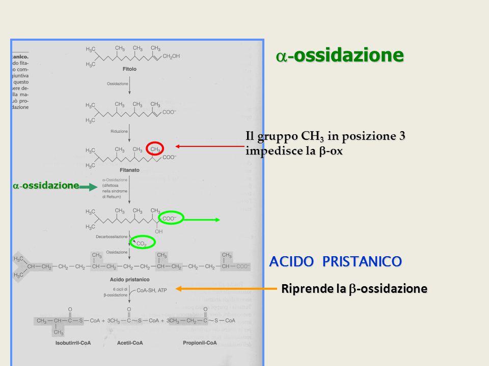  - ossidazione Il gruppo CH 3 in posizione 3 impedisce la  -ox  - ossidazione ACIDO PRISTANICO Riprende la  -ossidazione