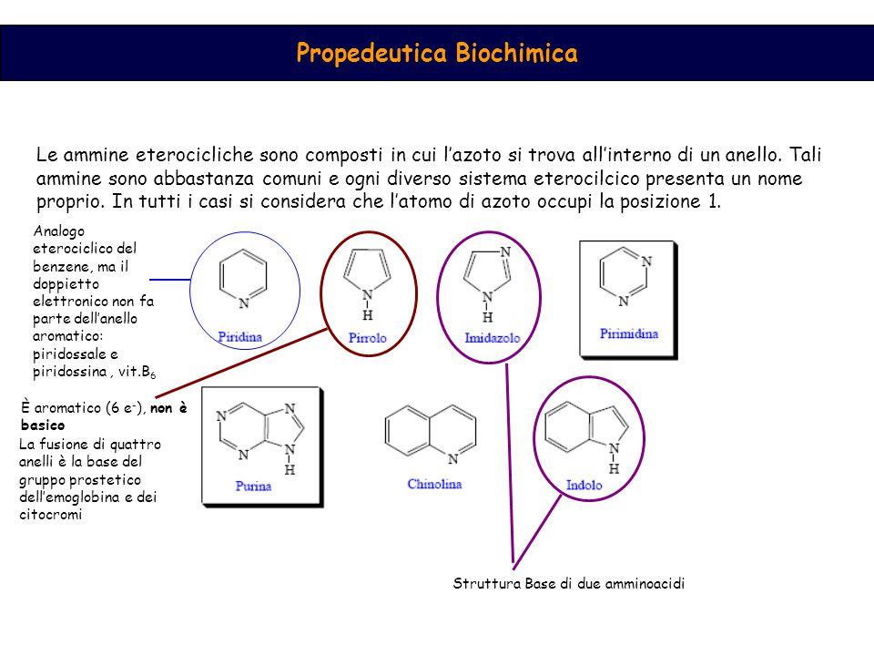 Propedeutica Biochimica Le ammine eterocicliche sono composti in cui l'azoto si trova all'interno di un anello.