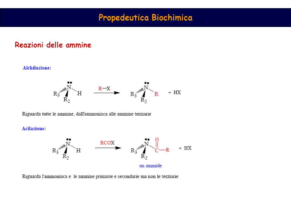 Propedeutica Biochimica Reazioni delle ammine