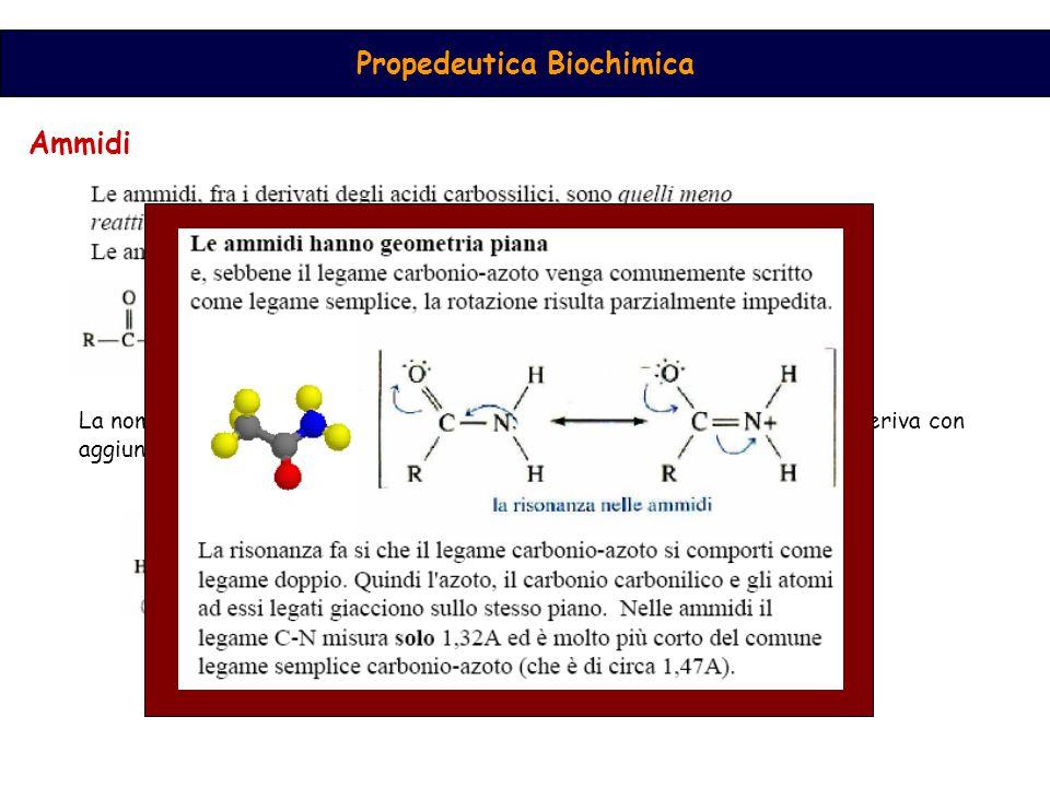 Propedeutica Biochimica Ammidi La nomenclatura prevede l'uso della radice dell'acido carbossilico da cui deriva con aggiunta del suffisso -ammide