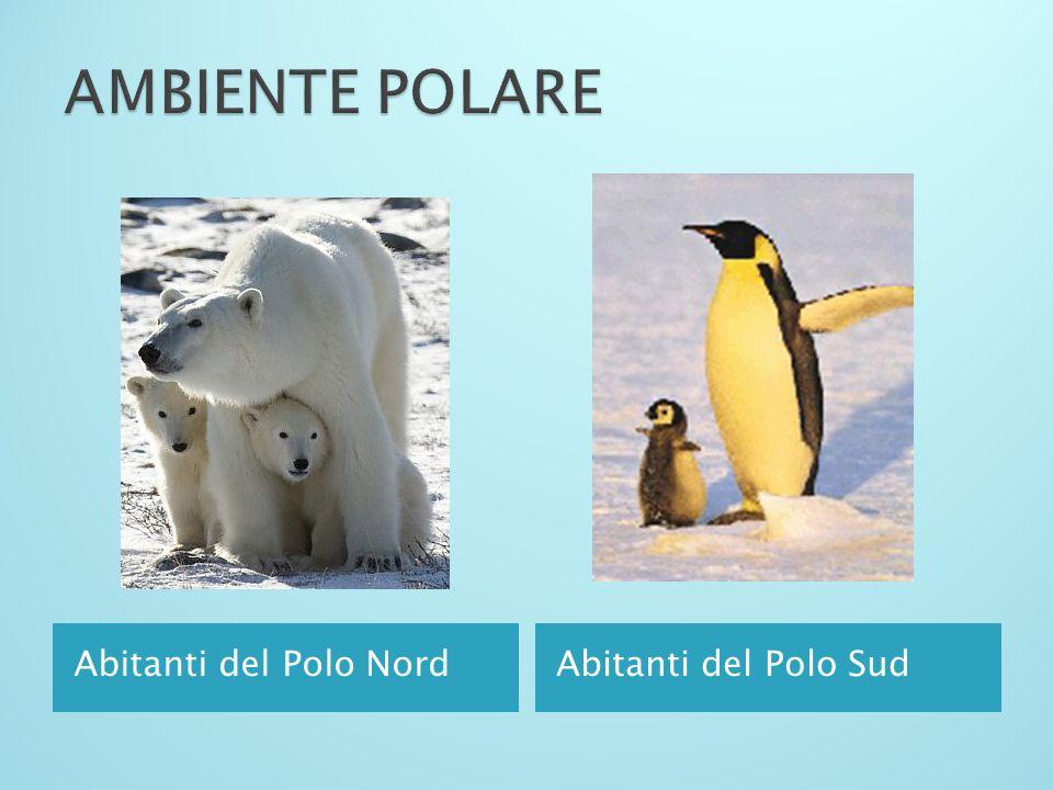 Vegetazione nulla solo ghiaccio Uomini dell'ambiente polare (Inuit)