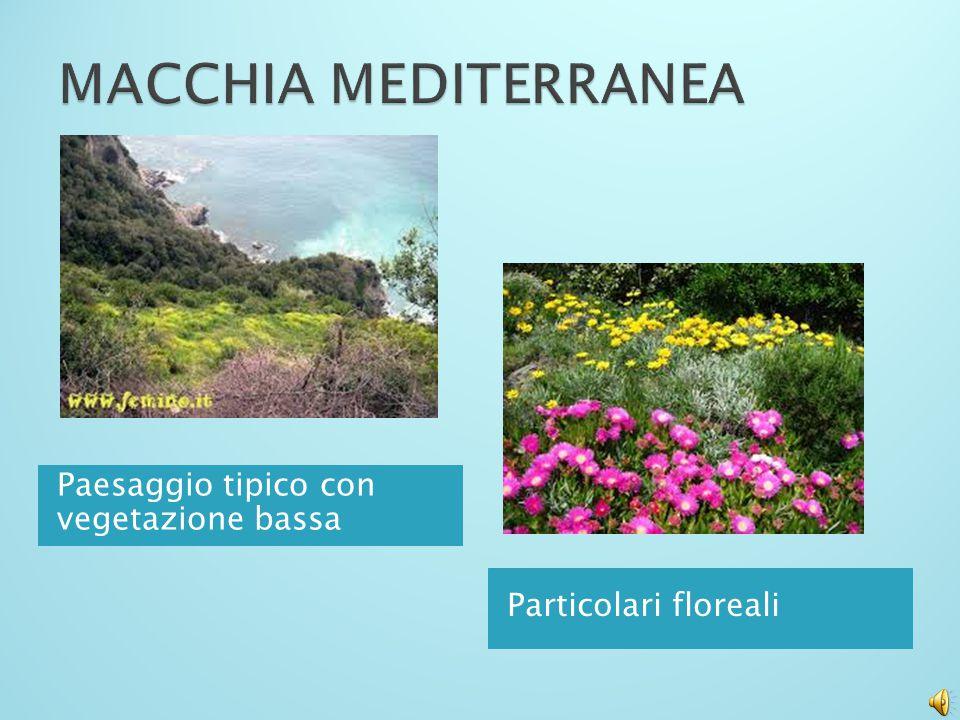 Flora e fauna tipica Tra le foreste più sfruttate