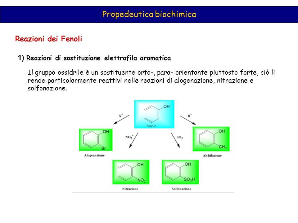 Propedeutica biochimica Reazioni dei Fenoli 1) Reazioni di sostituzione elettrofila aromatica Il gruppo ossidrile è un sostituente orto-, para- orient