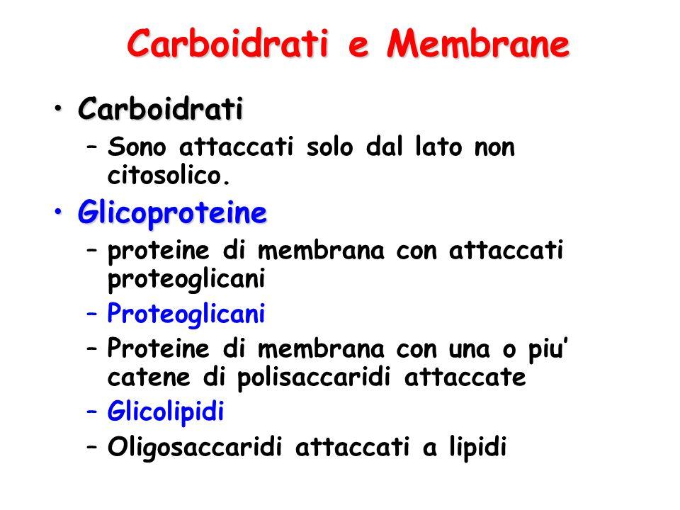 Carboidrati e Membrane CarboidratiCarboidrati –Sono attaccati solo dal lato non citosolico. GlicoproteineGlicoproteine –proteine di membrana con attac