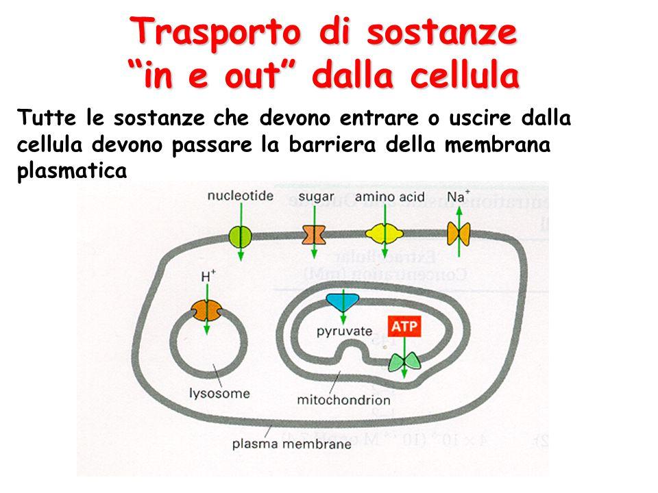 """Trasporto di sostanze """"in e out"""" dalla cellula Tutte le sostanze che devono entrare o uscire dalla cellula devono passare la barriera della membrana p"""