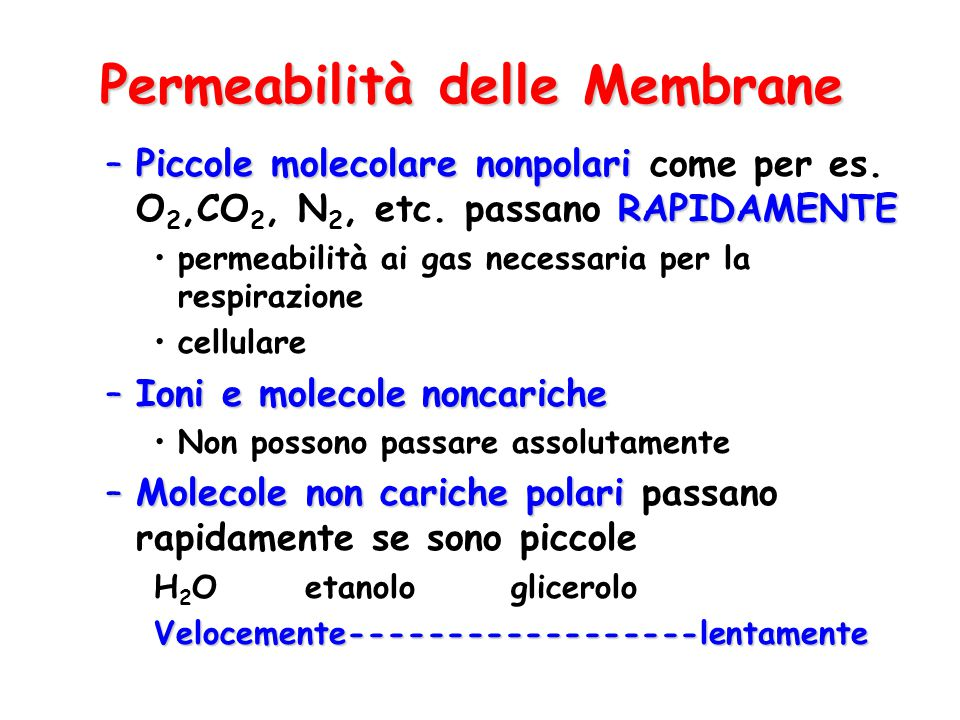 Permeabilità delle Membrane –Piccole molecolare nonpolari RAPIDAMENTE –Piccole molecolare nonpolari come per es. O 2,CO 2, N 2, etc. passano RAPIDAMEN