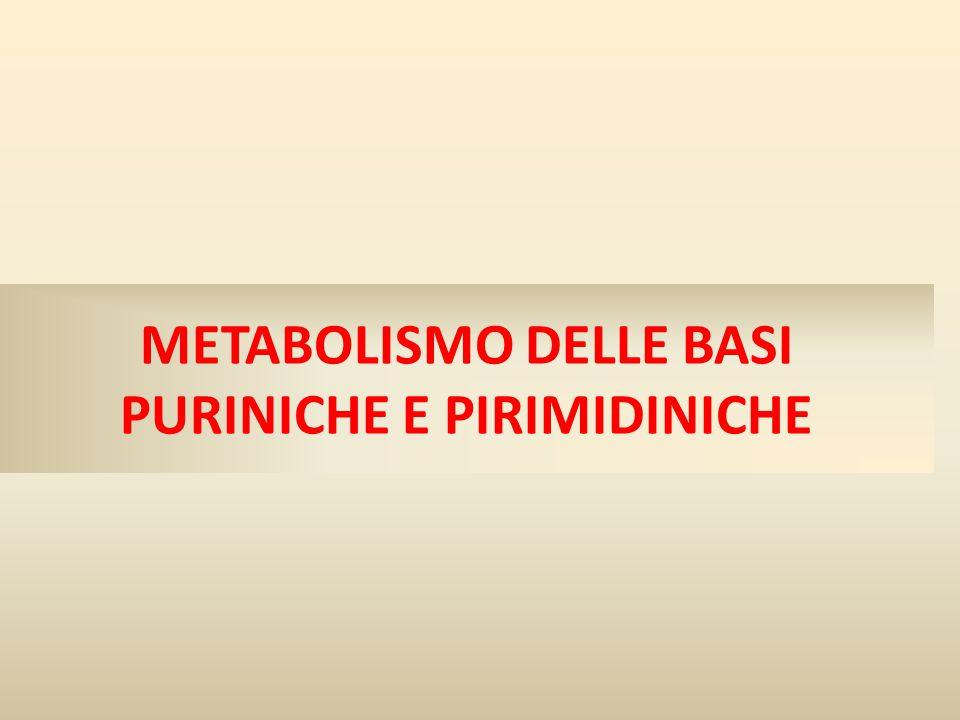 FORMAZIONE DI AMP E GMP A PARTIRE DALL'IMP La formazione di GMP richiede che l'IMP sia prima ossidato a XMP usando NAD, seguito dalla sostituzione dell'ossigeno sul carbonio 2 con un gruppo amminico della glutammina a spese di ATP.
