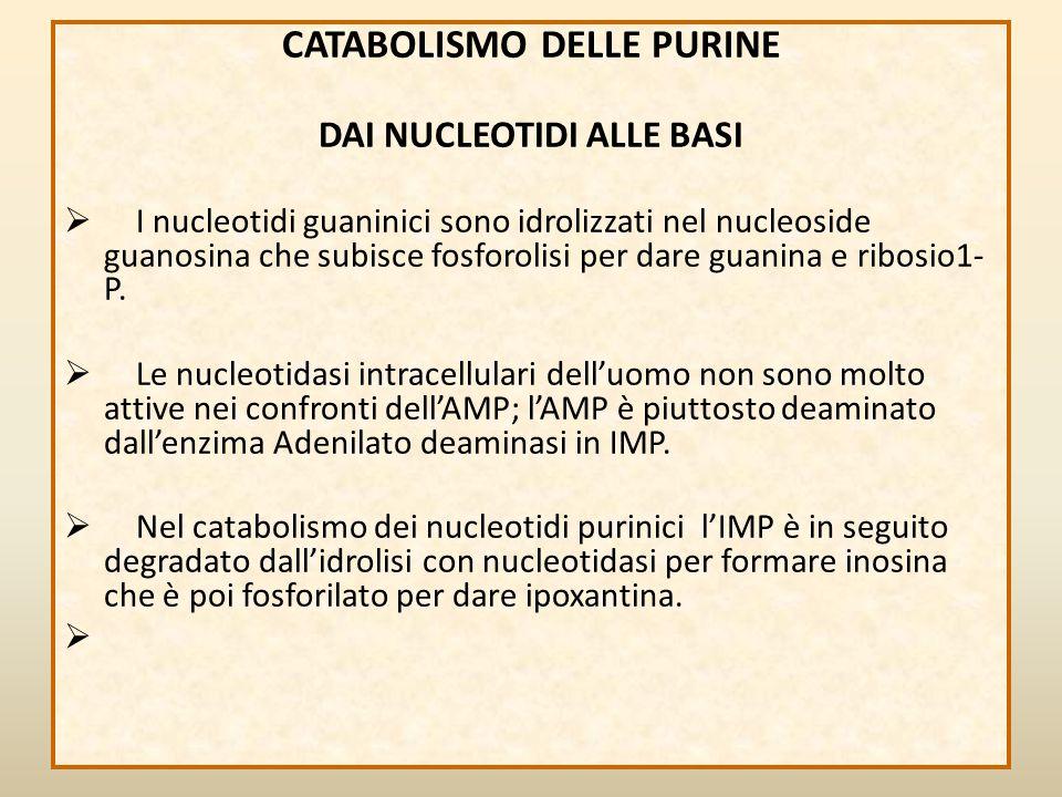 CATABOLISMO DELLE PURINE DAI NUCLEOTIDI ALLE BASI  I nucleotidi guaninici sono idrolizzati nel nucleoside guanosina che subisce fosforolisi per dare