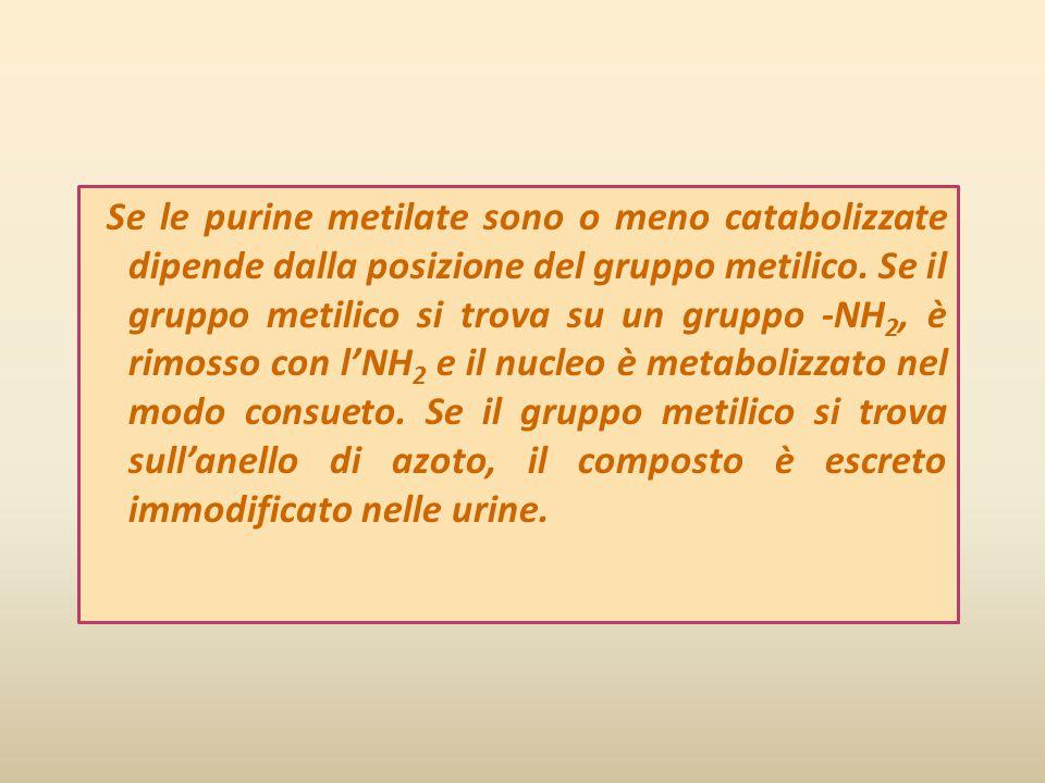 Se le purine metilate sono o meno catabolizzate dipende dalla posizione del gruppo metilico. Se il gruppo metilico si trova su un gruppo -NH 2, è rimo